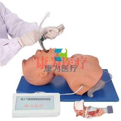 """""""康为医疗""""成人气管插管解剖结构模型,气管插管带解剖结构模型,带解剖结构的成人气管插管操作模型"""