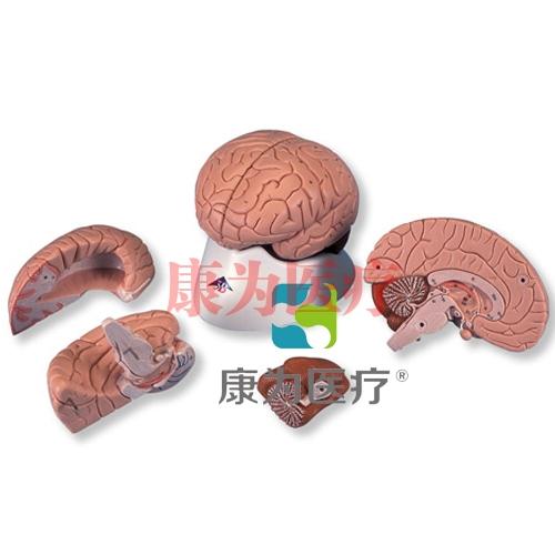 经典脑模型,4 部分