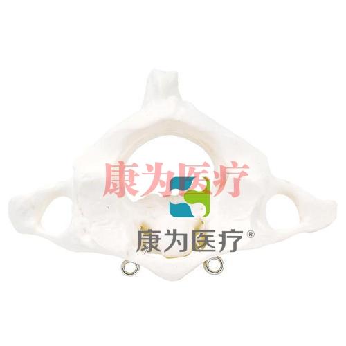 环椎和枢椎组合,无基架