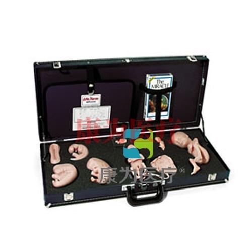 胚胎发育示教教程(模型、音像带)