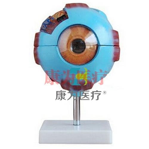 GPI感觉器官眼睛眼球硅胶模型(软硬结合)