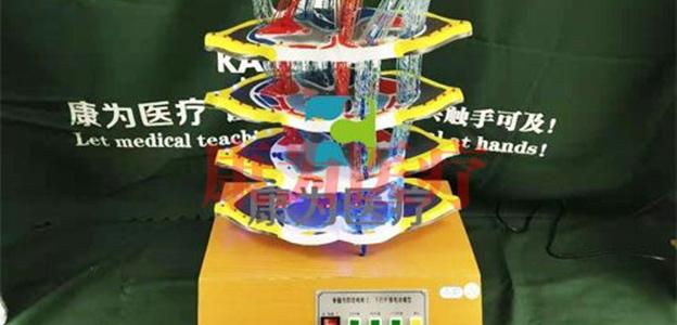 江苏电动医学教学模型