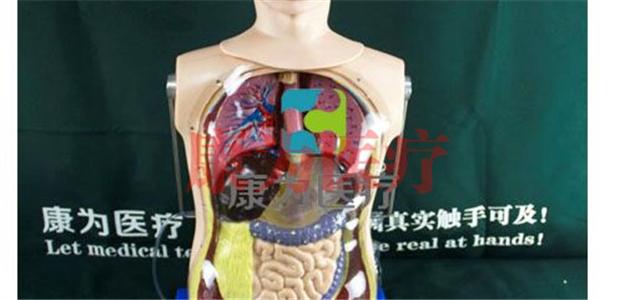 昆山护理医学模型Nursing